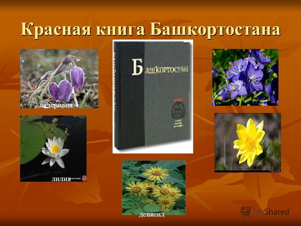 Красная книга Башкортостана лилия девясил валериана
