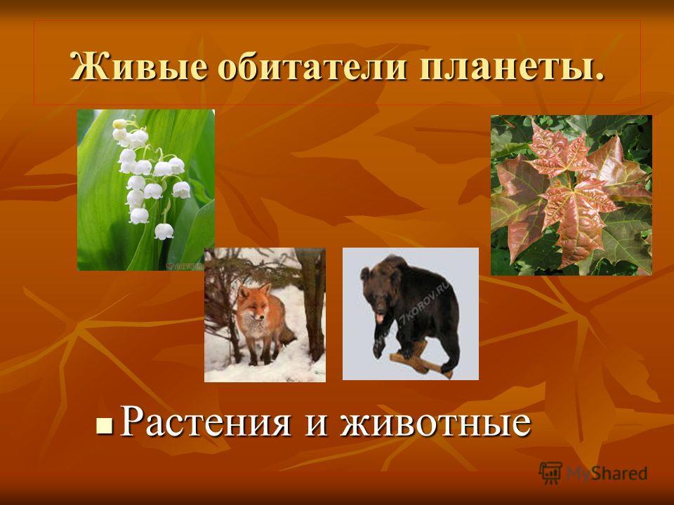 Живые обитатели планеты. Растения и животные Растения и животные