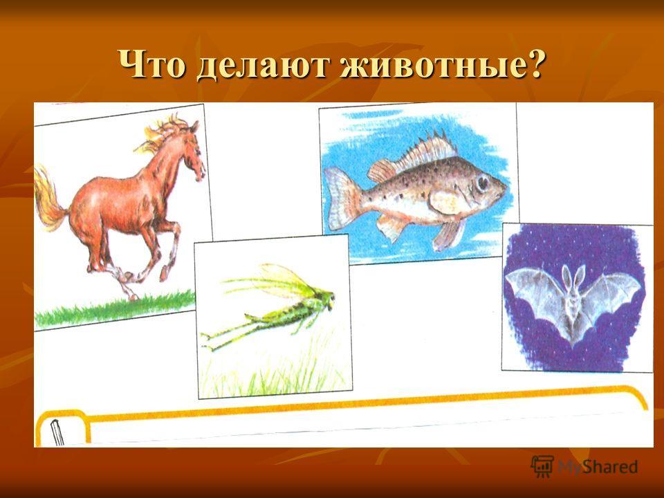 Что делают животные?