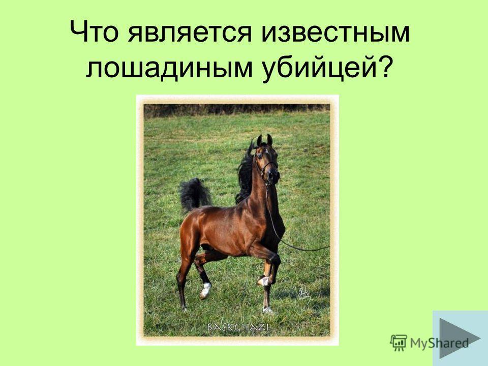 Что является известным лошадиным убийцей?