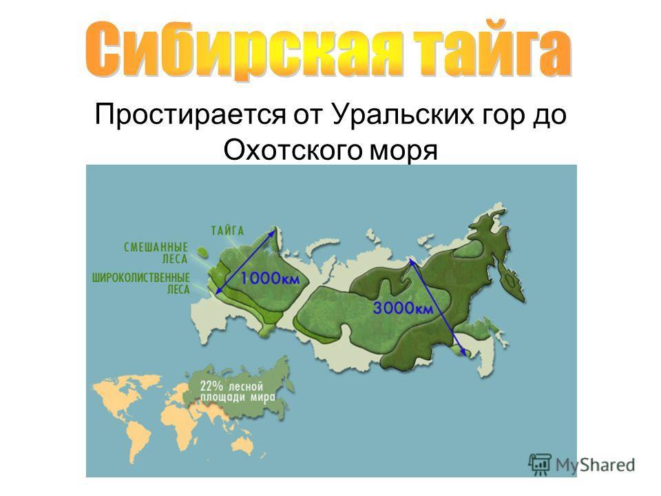 Простирается от Уральских гор до Охотского моря