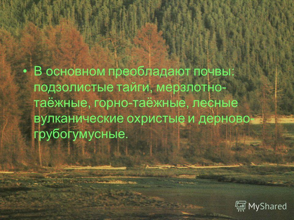 В основном преобладают почвы: подзолистые тайги, мерзлотно- таёжные, горно-таёжные, лесные вулканические охристые и дерново- грубогумусные.