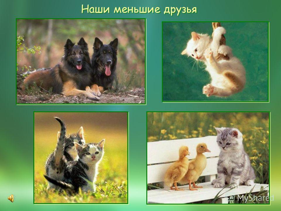 Наши меньшие друзья