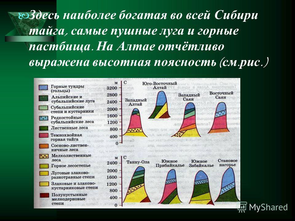 Здесь наиболее богатая во всей Сибири тайга, самые пушные луга и горные пастбища. На Алтае отчётливо выражена высотная поясность ( см. рис.)