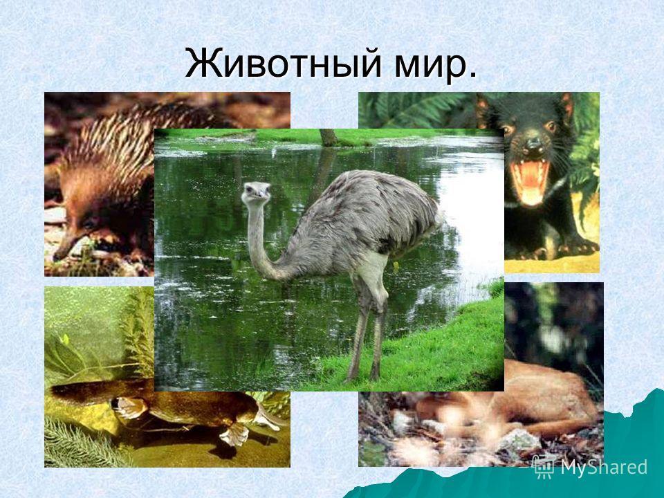 Животный мир.