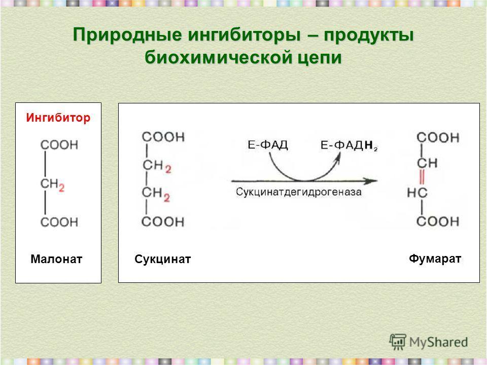 Природные ингибиторы – продукты биохимической цепи Малонат Сукцинат Фумарат Ингибитор