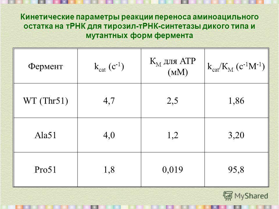 Кинетические параметры реакции переноса аминоацильного остатка на тРНК для тирозил-тРНК-синтетазы дикого типа и мутантных форм фермента Ферментk cat (с -1 ) К М для АТР (мМ) k cat /К М (с -1 М -1 ) WT (Thr51)4,72,51,86 Ala514,01,23,20 Pro511,80,01995