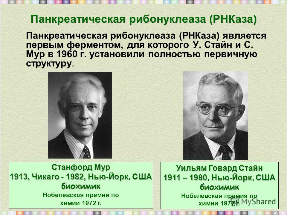 Панкреатическая рибонуклеаза (РНКаза) Панкреатическая рибонуклеаза (РНКаза) является первым ферментом, для которого У. Стайн и С. Мур в 1960 г. установили полностью первичную структуру. Уильям Говард Стайн 1911 – 1980, Нью-Йорк, США биохимик Нобелевс