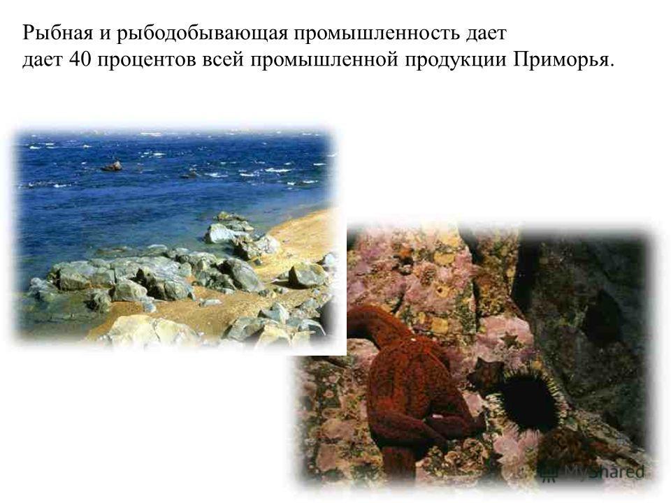 Рыбная и рыбодобывающая промышленность дает дает 40 процентов всей промышленной продукции Приморья.