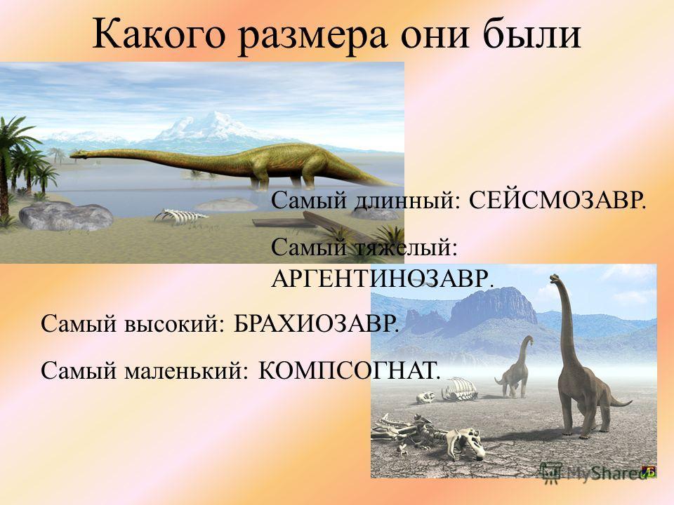 Какого размера они были Самый высокий: БРАХИОЗАВР. Самый маленький: КОМПСОГНАТ. Самый длинный: СЕЙСМОЗАВР. Самый тяжелый: АРГЕНТИНОЗАВР.