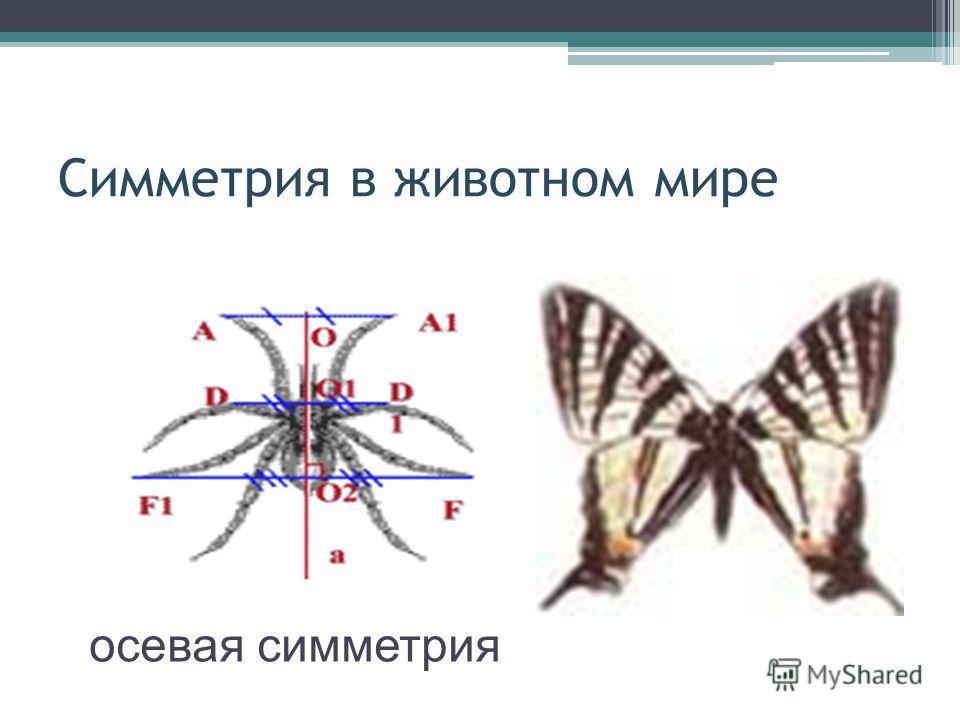 Симметрия в животном мире осевая симметрия