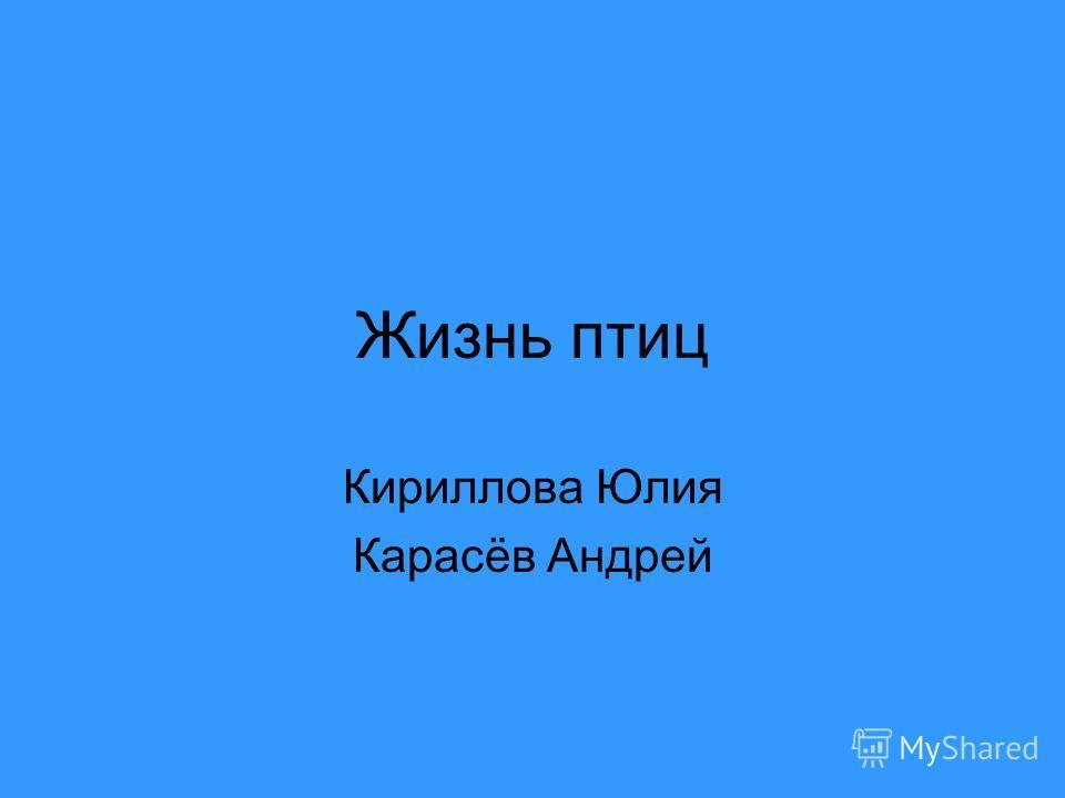 Жизнь птиц Кириллова Юлия Карасёв Андрей