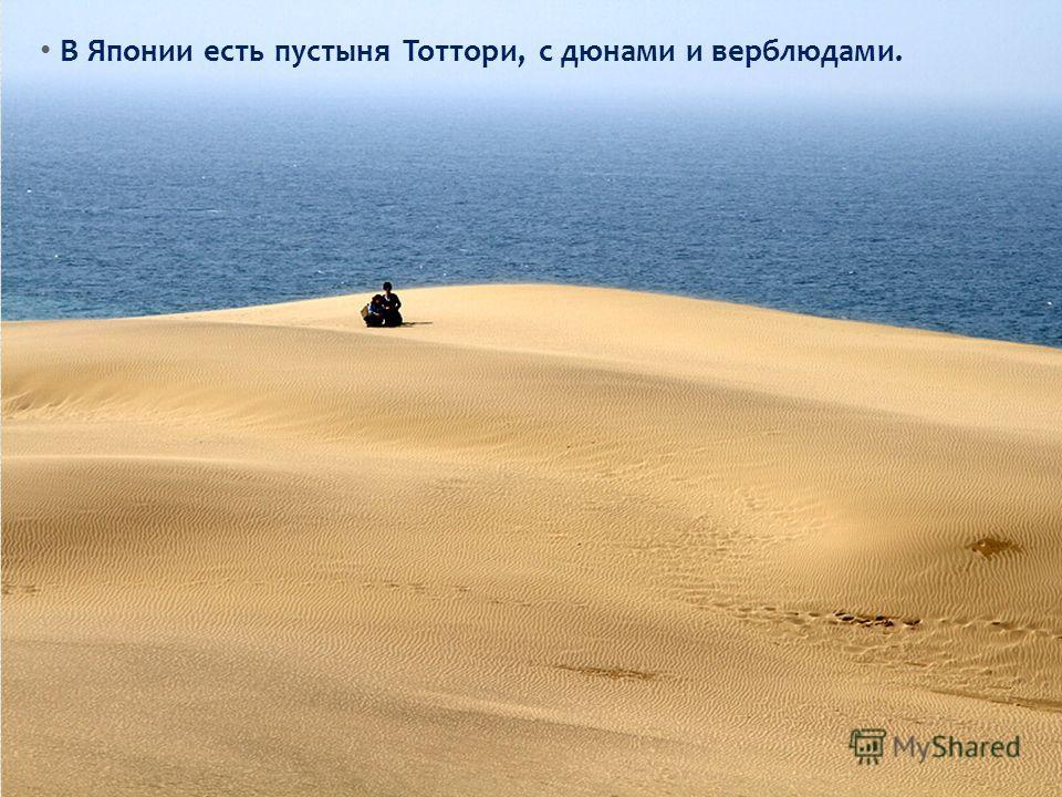 В Японии есть пустыня Тоттори, с дюнами и верблюдами.