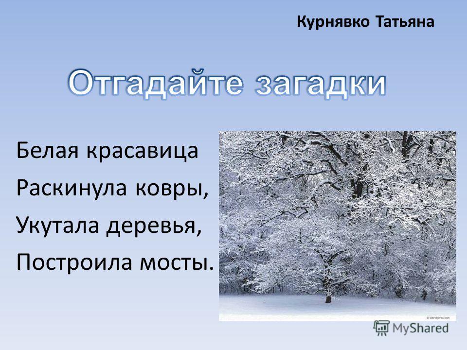 Курнявко Татьяна Белая красавица Раскинула ковры, Укутала деревья, Построила мосты.