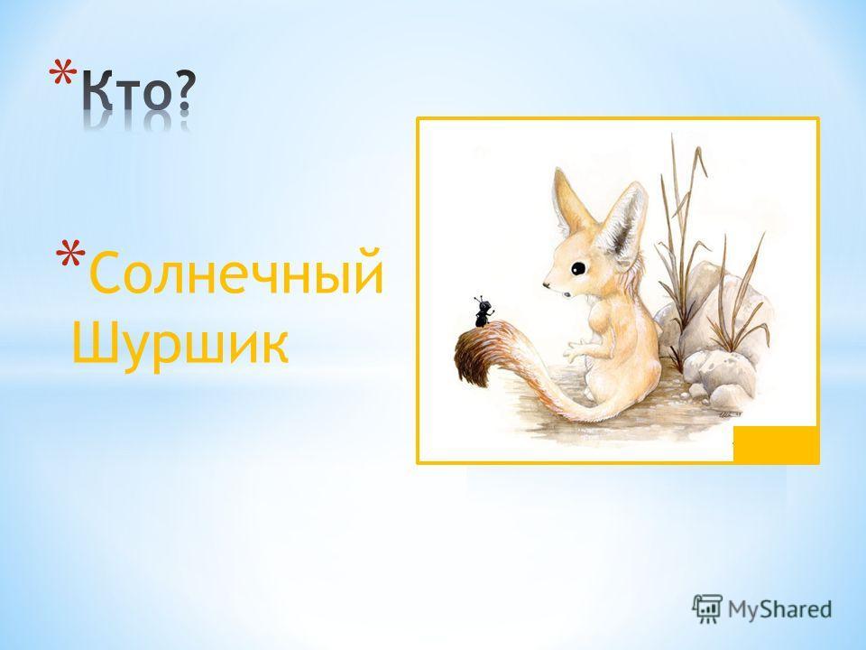 * Солнечный Шуршик