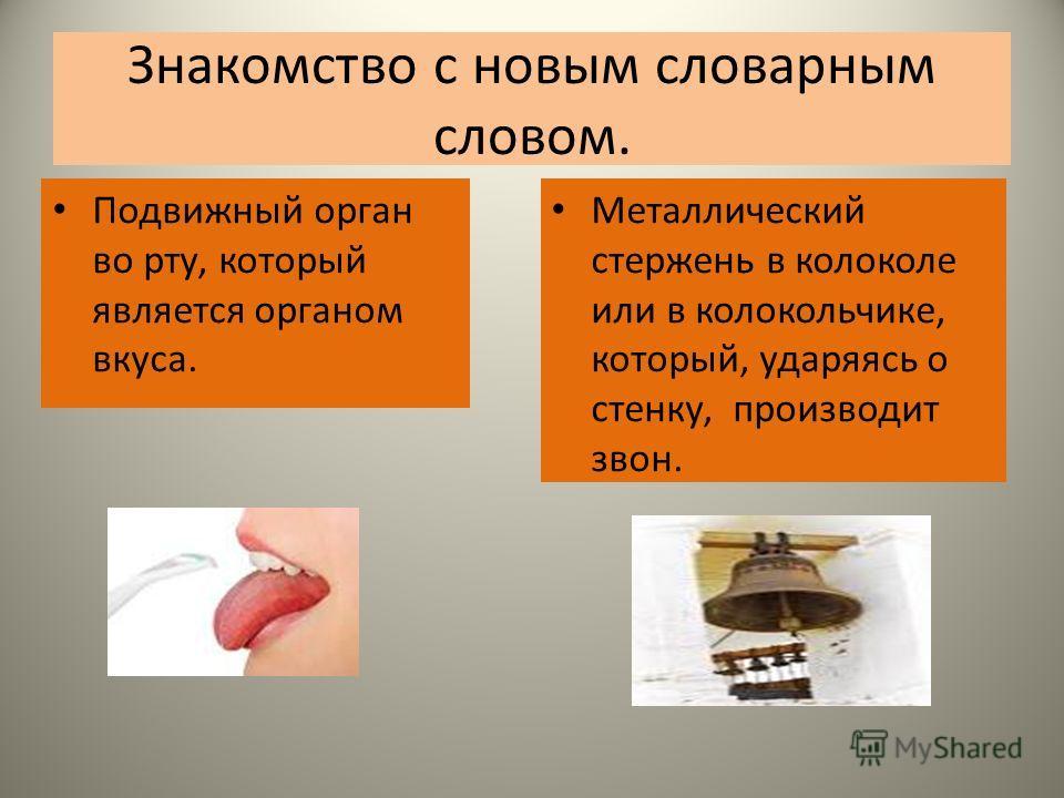 Знакомство с новым словарным словом. Подвижный орган во рту, который является органом вкуса. Металлический стержень в колоколе или в колокольчике, который, ударяясь о стенку, производит звон.