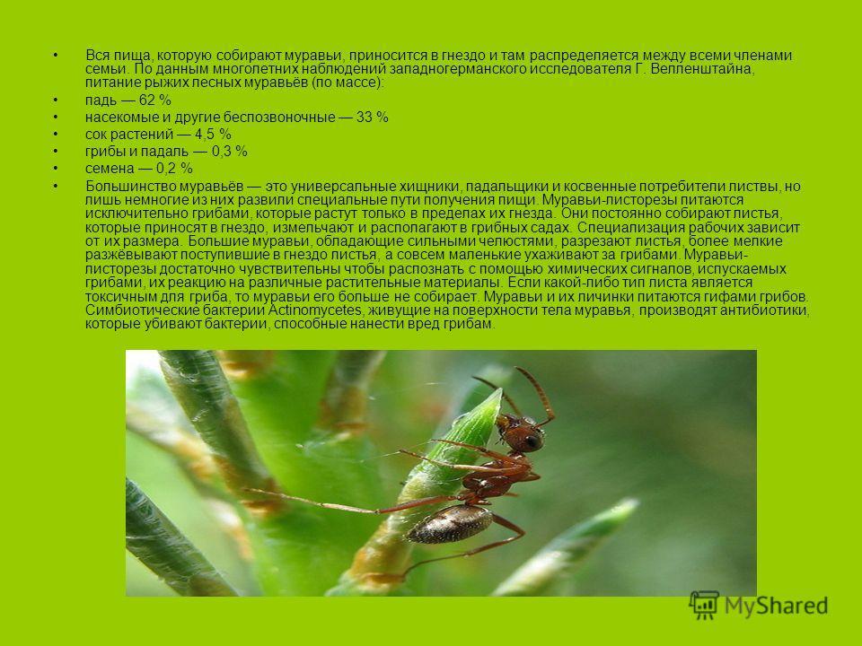 Вся пища, которую собирают муравьи, приносится в гнездо и там распределяется между всеми членами семьи. По данным многолетних наблюдений западногерманского исследователя Г. Велленштайна, питание рыжих лесных муравьёв (по массе): падь 62 % насекомые и