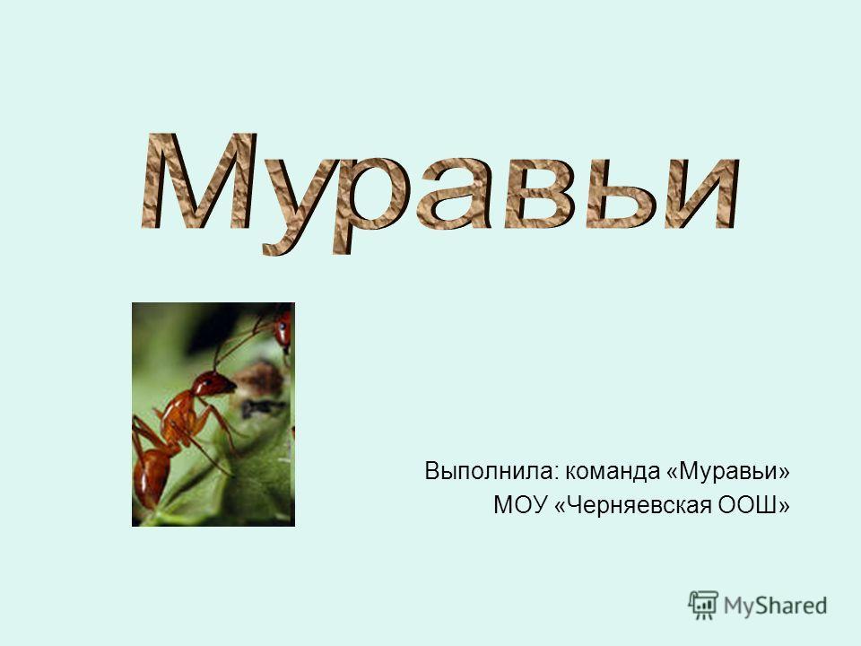 Выполнила: команда «Муравьи» МОУ «Черняевская ООШ»