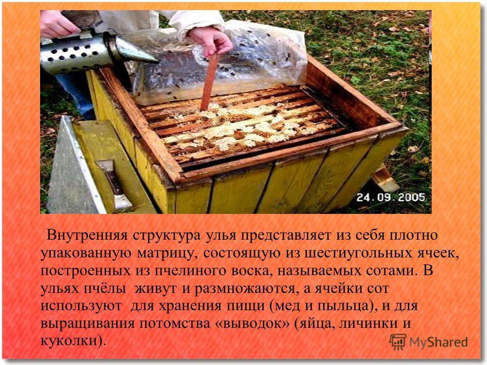Внутренняя структура улья представляет из себя плотно упакованную матрицу, состоящую из шестиугольных ячеек, построенных из пчелиного воска, называемых сотами. В ульях пчёлы живут и размножаются, а ячейки сот используют для хранения пищи (мед и пыльц