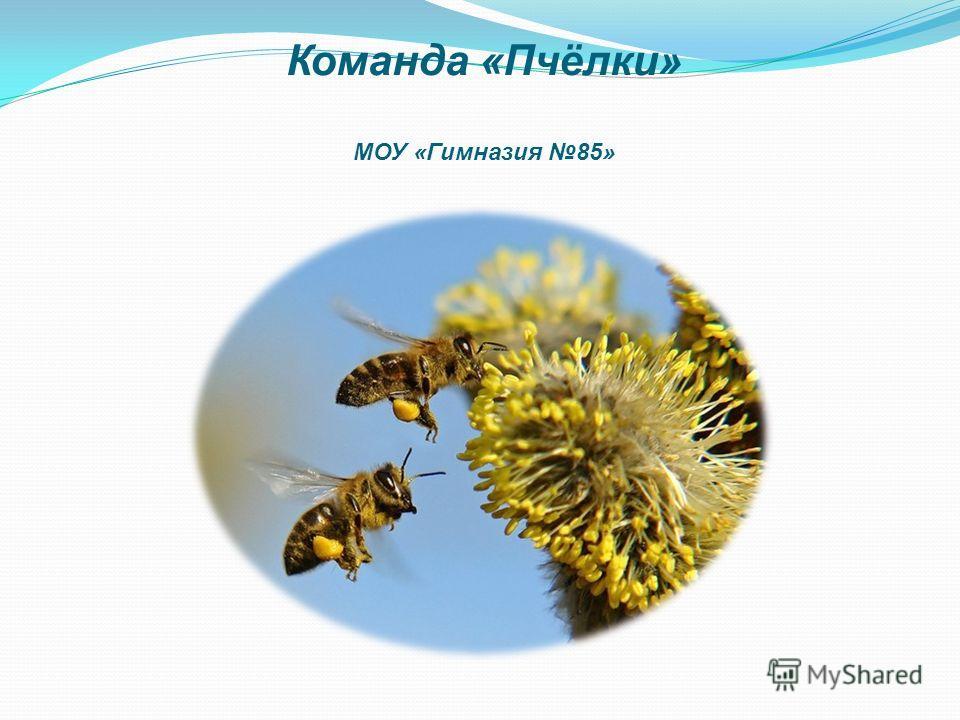 Команда «Пчёлки» МОУ «Гимназия 85»