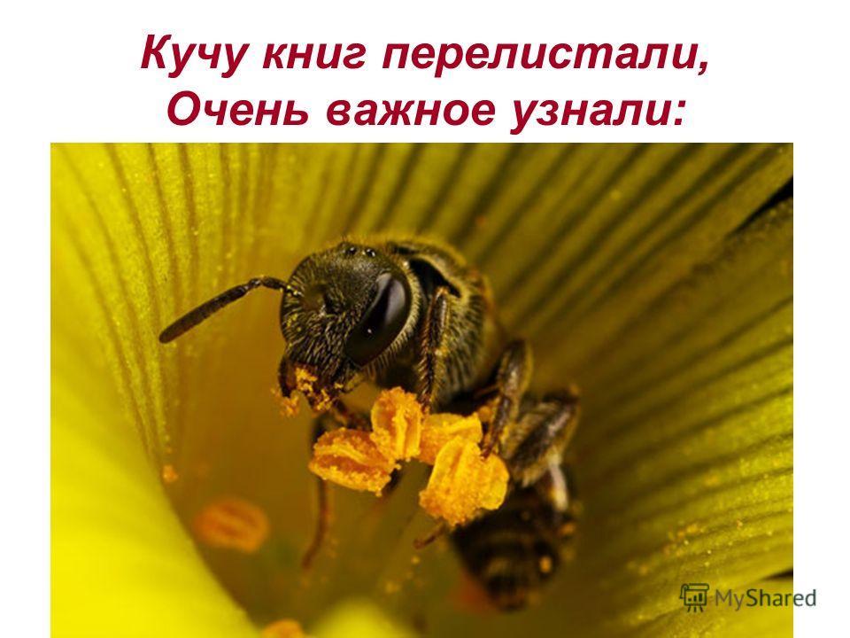 Кучу книг перелистали, Очень важное узнали: Пчелиный рой может весить до 7- 8 кг, он состоит из 50 - 60 тысяч пчел, имеющих в своих зобиках 2- 3 кг меда. Медовым запасом при ненастной погоде пчелы могут питаться в течении 8 дней.
