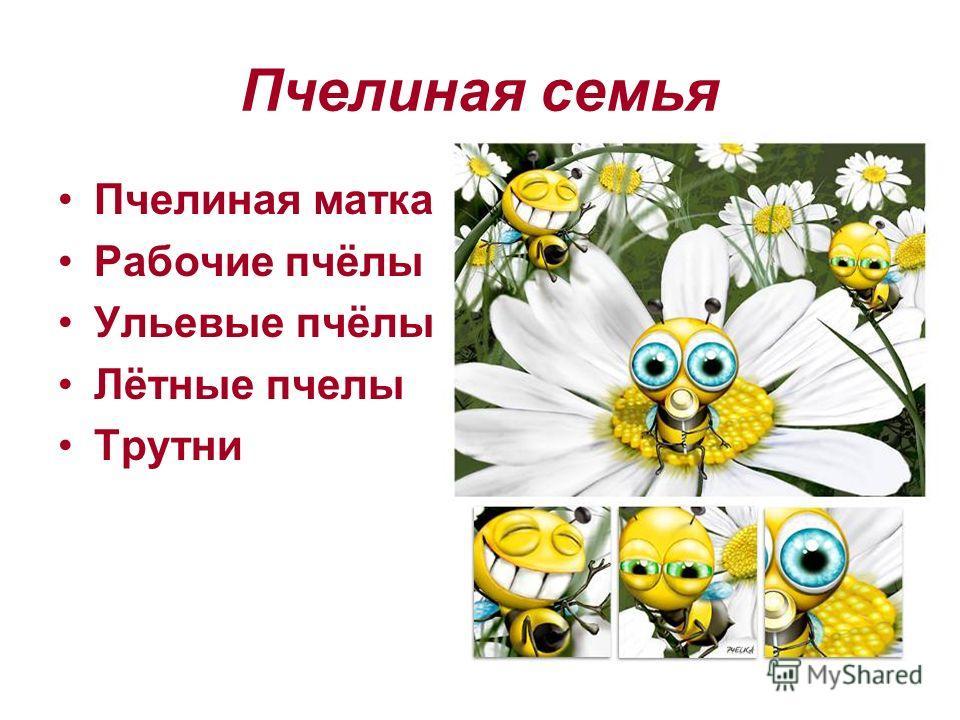 Пчелиная семья Пчелиная матка Рабочие пчёлы Ульевые пчёлы Лётные пчелы Трутни