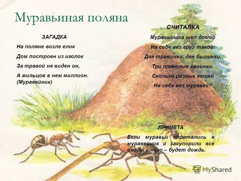 Муравьиная поляна ЗАГАДКА На поляне возле елок Дом построен из иголок За травой не виден он, А жильцов в нем миллион. (Муравейник) ПРИМЕТА Если муравьи спрятались в муравейник и закупорили все входы в него – будет дождь. СЧИТАЛКА Муравьишка шел домой