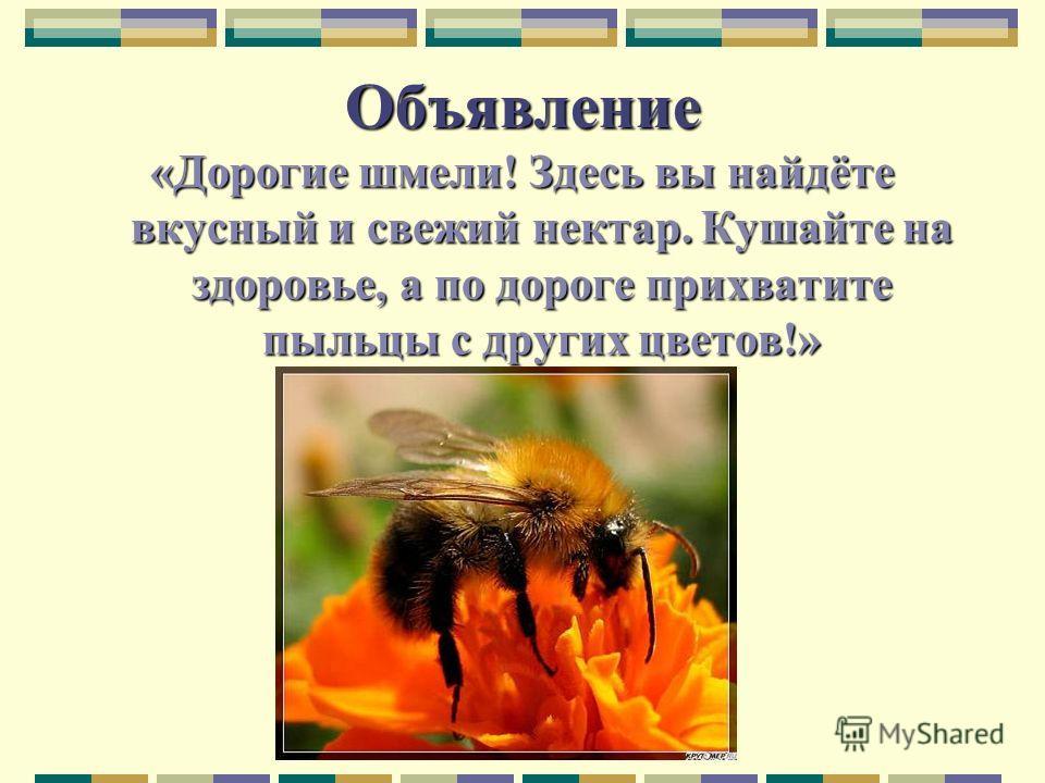 Объявление «Дорогие шмели! Здесь вы найдёте вкусный и свежий нектар. Кушайте на здоровье, а по дороге прихватите пыльцы с других цветов!»