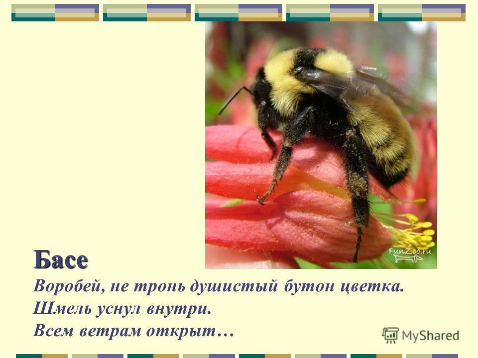 Басе Басе Воробей, не тронь душистый бутон цветка. Шмель уснул внутри. Всем ветрам открыт…