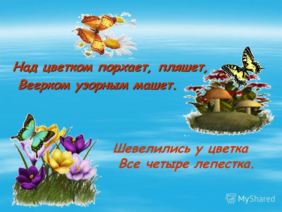 Над цветком порхает, пляшет, Веерком узорным машет. Веерком узорным машет. Шевелились у цветка Все четыре лепестка.