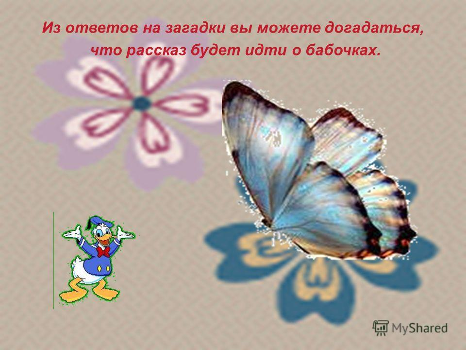 Из ответов на загадки вы можете догадаться, что рассказ будет идти о бабочках.