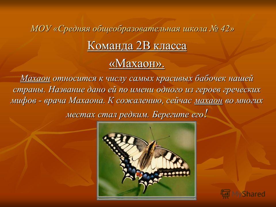 МОУ «Средняя общеобразовательная школа 42» Команда 2В класса «Махаон». Махаон относится к числу самых красивых бабочек нашей страны. Название дано ей по имени одного из героев греческих мифов - врача Махаона. К сожалению, сейчас махаон во многих мест
