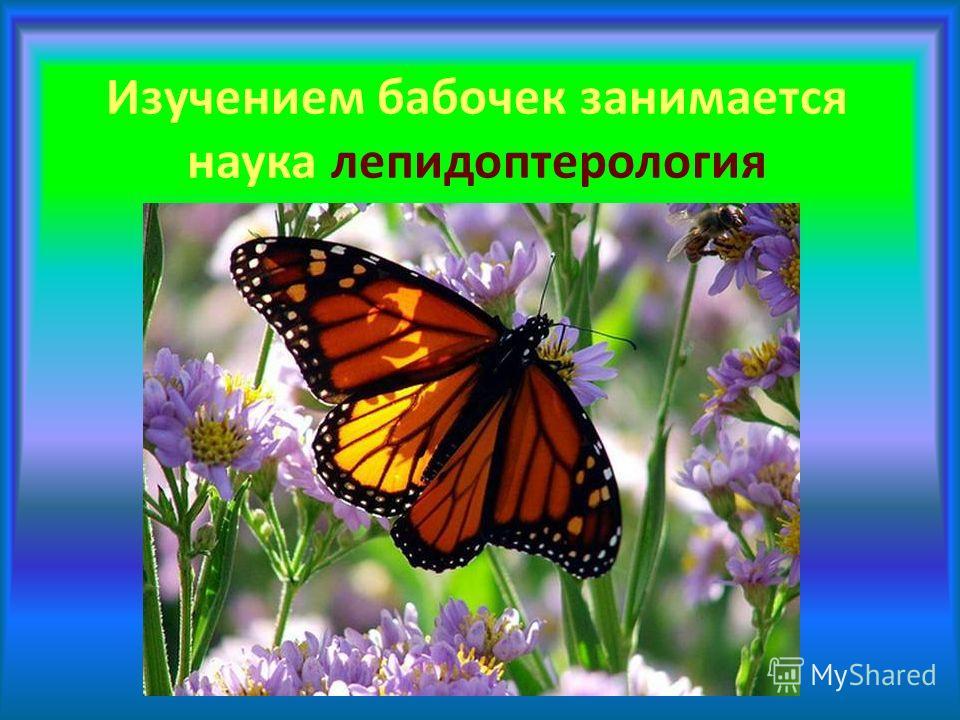 Изучением бабочек занимается наука лепидоптерология