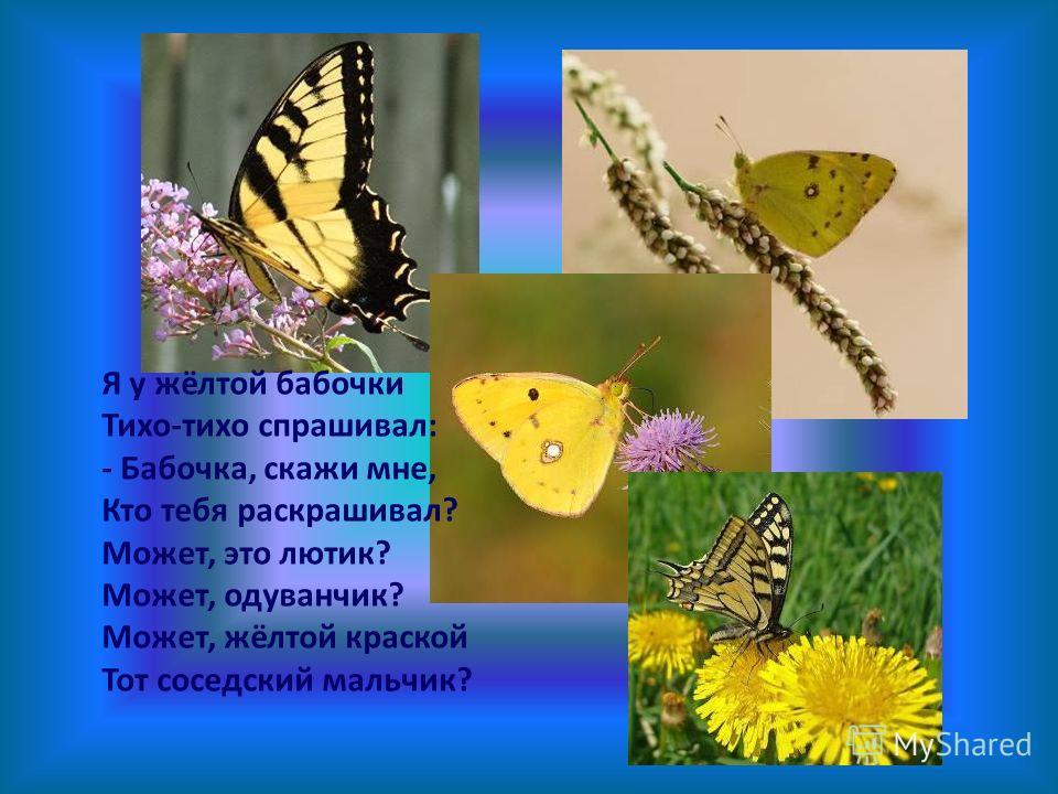 Я у жёлтой бабочки Тихо-тихо спрашивал: - Бабочка, скажи мне, Кто тебя раскрашивал? Может, это лютик? Может, одуванчик? Может, жёлтой краской Тот соседский мальчик?