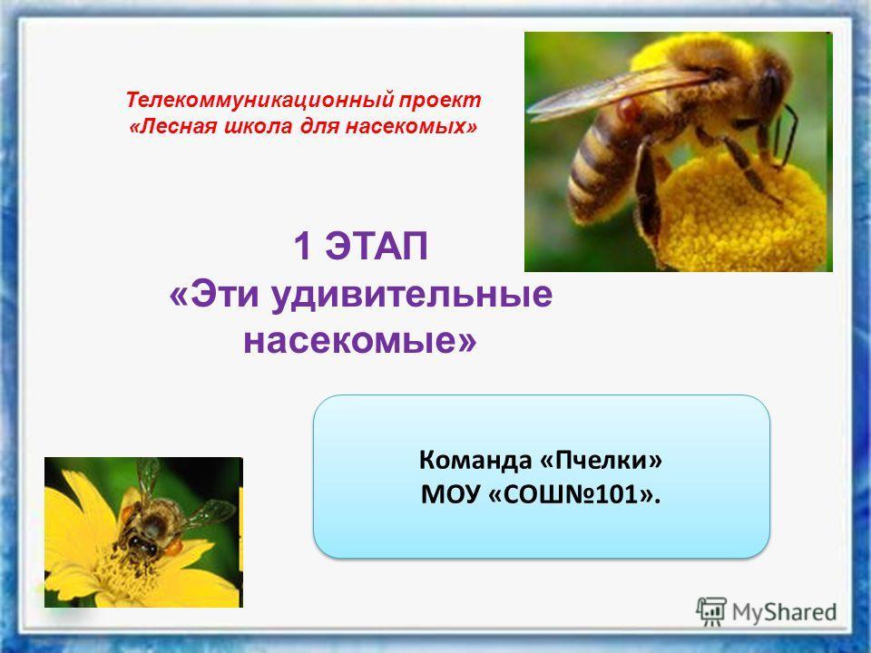 Телекоммуникационный проект «Лесная школа для насекомых» 1 ЭТАП «Эти удивительные насекомые» Команда «Пчелки» МОУ «СОШ101». Команда «Пчелки» МОУ «СОШ101».