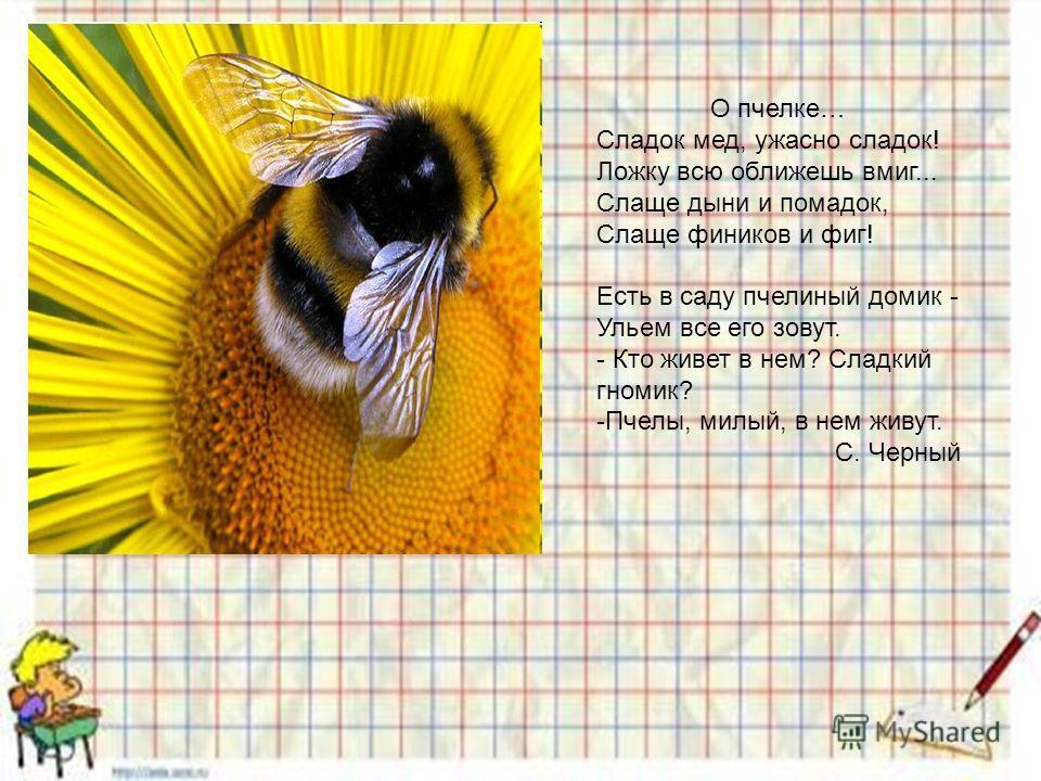 О пчелке… Сладок мед, ужасно сладок! Ложку всю оближешь вмиг... Слаще дыни и помадок, Слаще фиников и фиг! Есть в саду пчелиный домик - Ульем все его зовут. - Кто живет в нем? Сладкий гномик? -Пчелы, милый, в нем живут. С. Черный