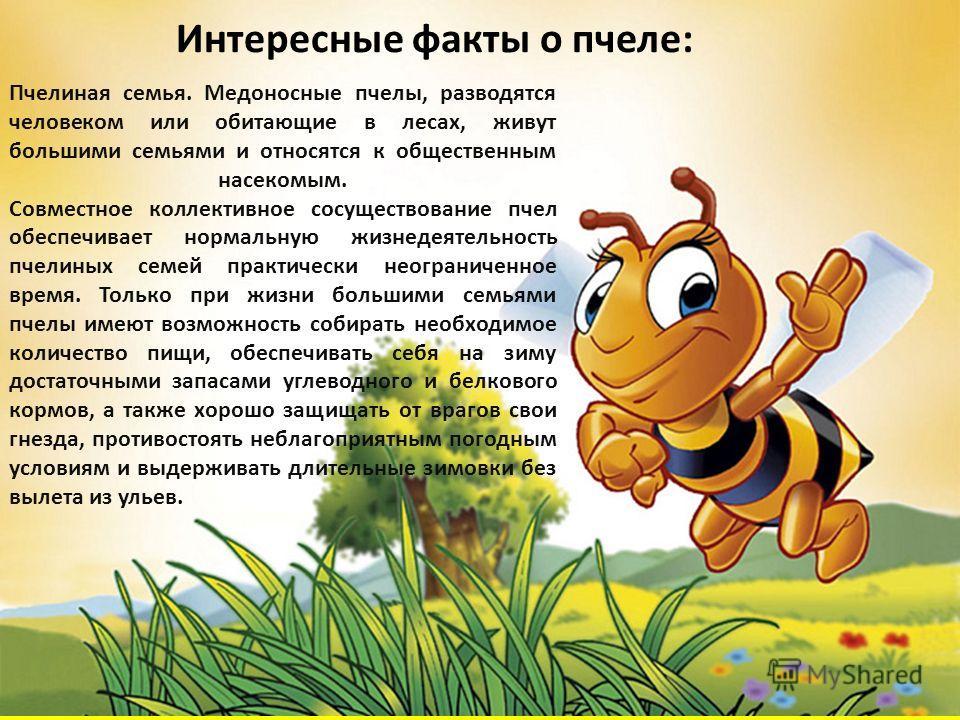 Пчелиная семья. Медоносные пчелы, разводятся человеком или обитающие в лесах, живут большими семьями и относятся к общественным насекомым. Совместное коллективное сосуществование пчел обеспечивает нормальную жизнедеятельность пчелиных семей практичес