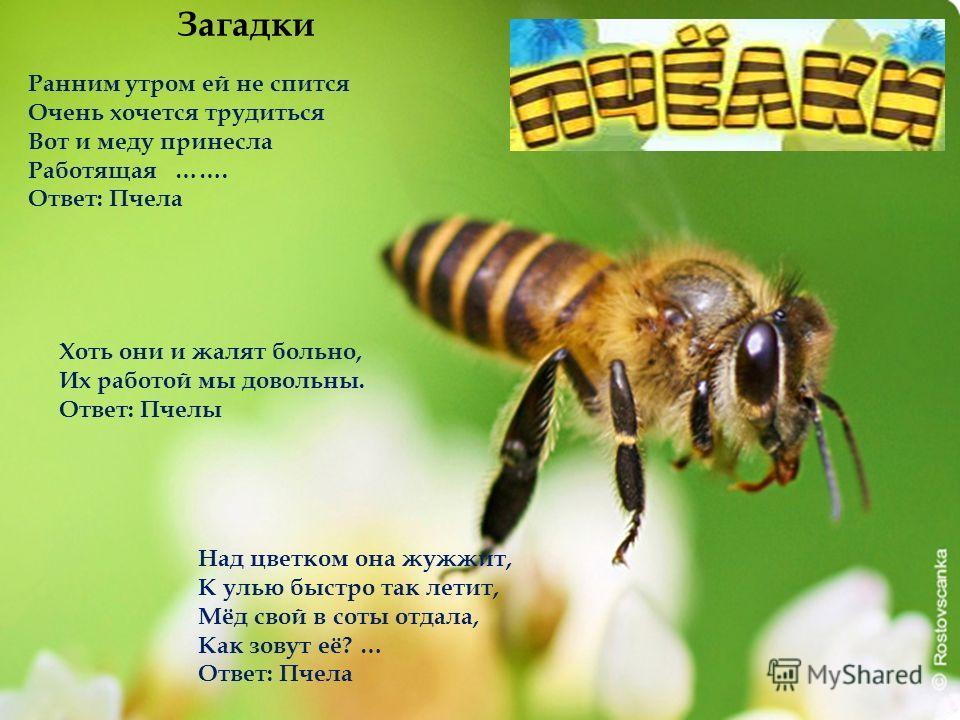 Пчелка жужужу mp3 скачать