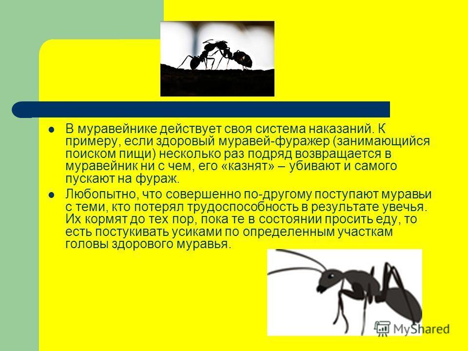 В муравейнике действует своя система наказаний. К примеру, если здоровый муравей-фуражер (занимающийся поиском пищи) несколько раз подряд возвращается в муравейник ни с чем, его «казнят» – убивают и самого пускают на фураж. Любопытно, что совершенно
