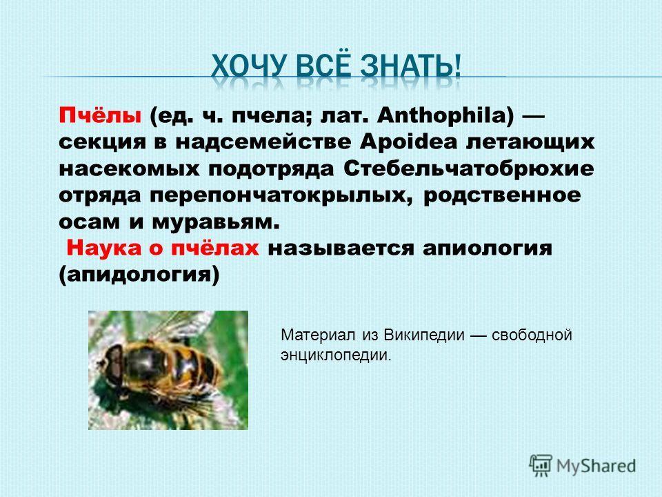 Пчёлы (ед. ч. пчела; лат. Anthophila) секция в надсемействе Apoidea летающих насекомых подотряда Стебельчатобрюхие отряда перепончатокрылых, родственное осам и муравьям. Наука о пчёлах называется апиология (апидология) Материал из Википедии свободной