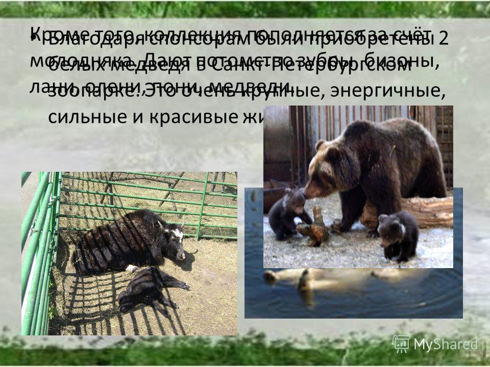 Благодаря спонсорам были приобретены 2 белых медведя в Санкт-Петербургском зоопарке. Это очень крупные, энергичные, сильные и красивые животные Арктики. Кроме того, коллекция пополняется за счёт молодняка. Дают потомство зубры, бизоны, лани, олени, п