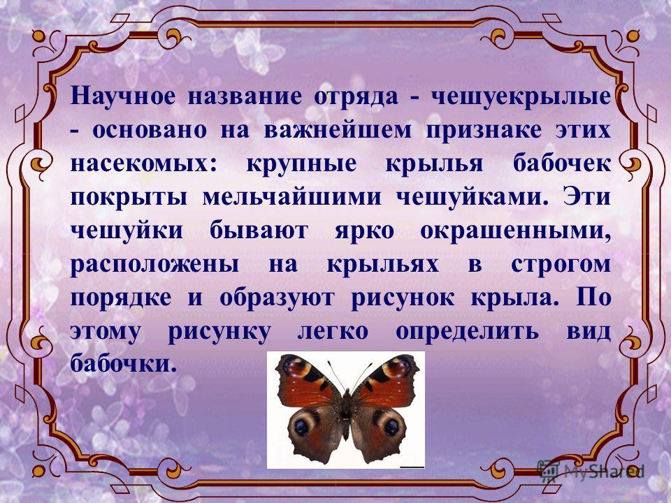 Научное название отряда - чешуекрылые - основано на важнейшем признаке этих насекомых: крупные крылья бабочек покрыты мельчайшими чешуйками. Эти чешуйки бывают ярко окрашенными, расположены на крыльях в строгом порядке и образуют рисунок крыла. По эт