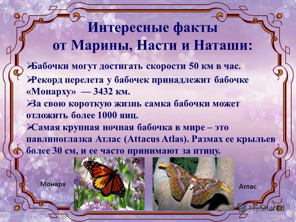 Интересные факты от Марины, Насти и Наташи: Бабочки могут достигать скорости 50 км в час. Рекорд перелета у бабочек принадлежит бабочке «Монарху» 3432 км. За свою короткую жизнь самка бабочки может отложить более 1000 яиц. Самая крупная ночная бабочк