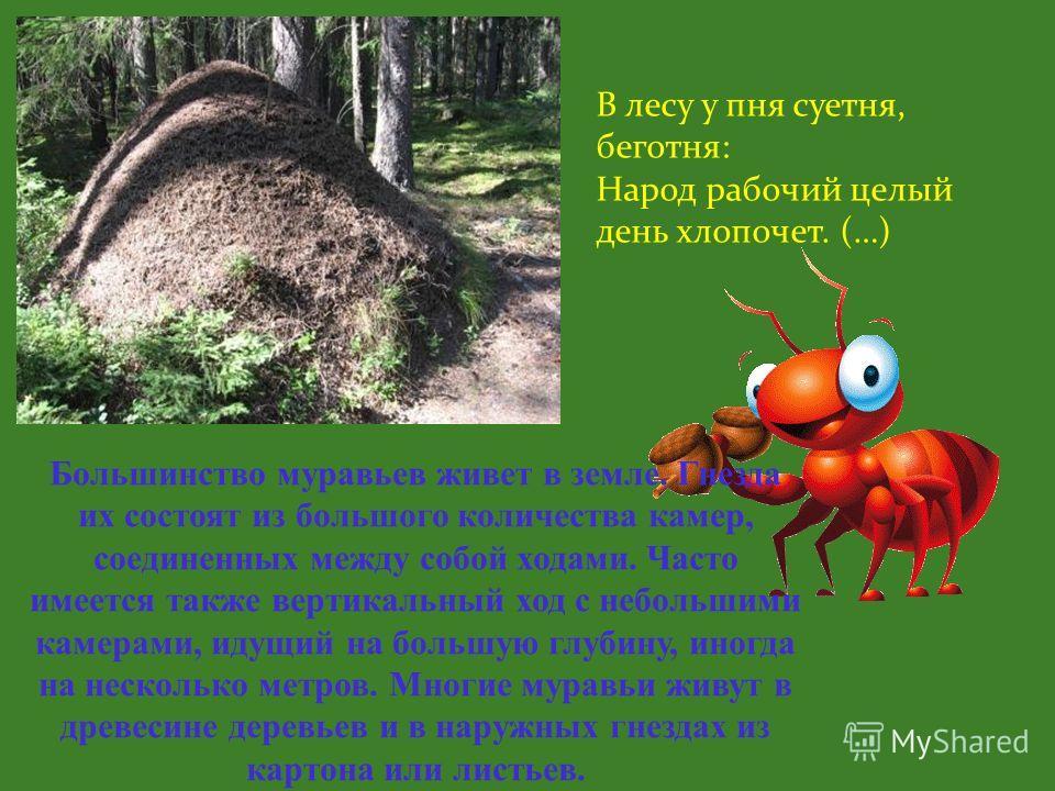 Размножение и расселение муравьев происходит следующим образом: раз в году (У некоторых видов дважды), у каждого вида в свое время, в гнезде появляется множество крылатых муравьев. Это молодые самки и самцы. Некоторое время они еще живут в гнезде, а