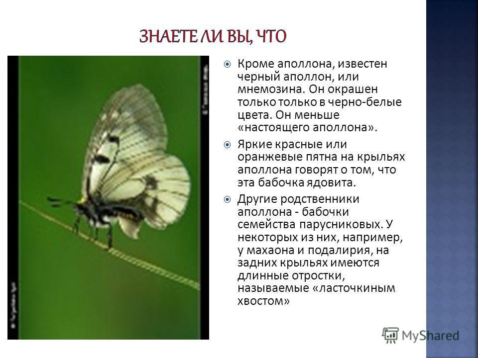 Кроме аполлона, известен черный аполлон, или мнемозина. Он окрашен только только в черно-белые цвета. Он меньше «настоящего аполлона». Яркие красные или оранжевые пятна на крыльях аполлона говорят о том, что эта бабочка ядовита. Другие родственники а