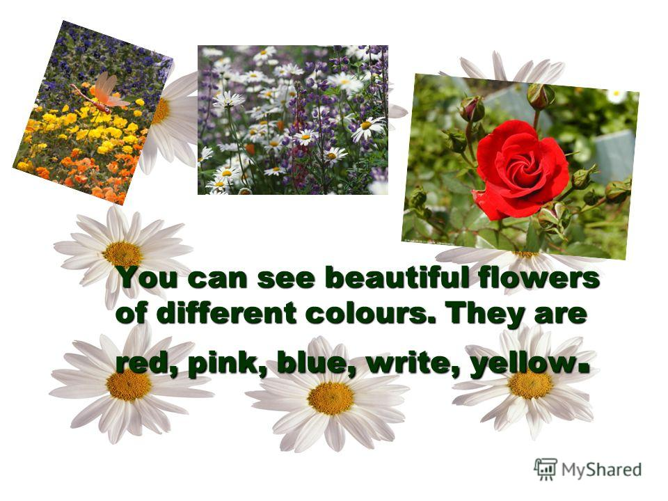 You can see beautiful flowers of different colours. They are red, pink, blue, write, yellow.