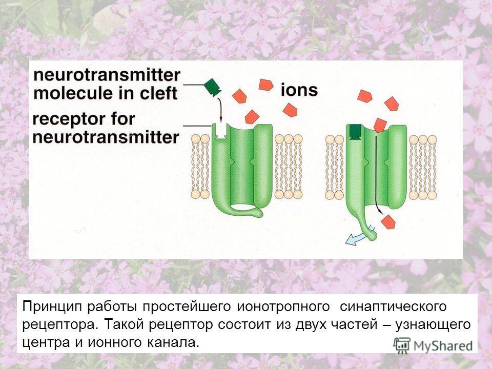 Принцип работы простейшего ионотропного синаптического рецептора. Такой рецептор состоит из двух частей – узнающего центра и ионного канала.