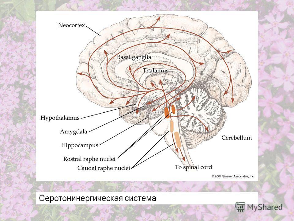 Серотонинергическая система