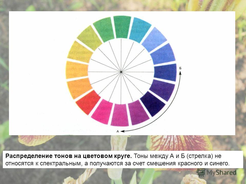 Распределение тонов на цветовом круге. Тоны между А и Б (стрелка) не относятся к спектральным, а получаются за счет смешения красного и синего.