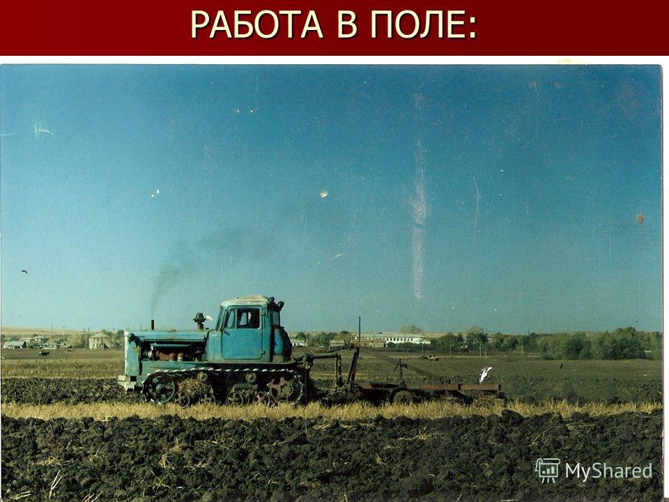 РАБОТА В ПОЛЕ: